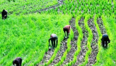 Agriculture has created over 6 million jobs under Buhari – Audu Ogbeh