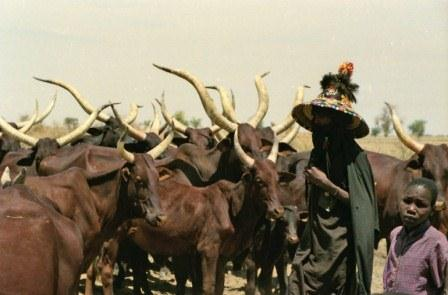 FULL STATEMENT: We lost 1000 Fulani, 2 million cows to gang backed by state govt – Miyetti Allah