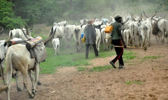 We are not going to donate land for ranching – South-East Governorxs