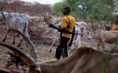 Boko Haram Steals 200 Cows, 300 Sheep in Borno- NEMA
