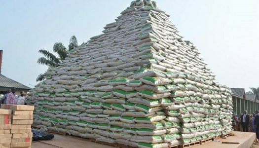 FORGET BOKO HARAM, Borno farmers create rice pyramid