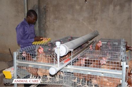 Eco-Pro Caging System Elevates Backyard Poultry Farming in Nigeria