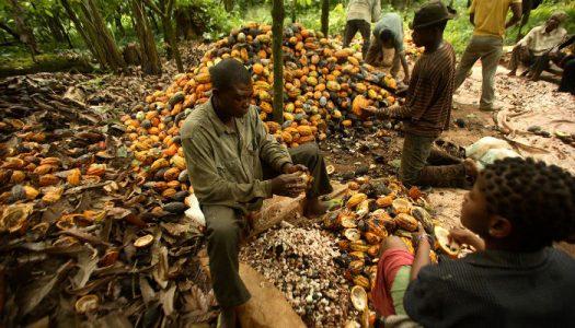 BOMBSHELL! Nigeria lacks capacity to export perishable goods